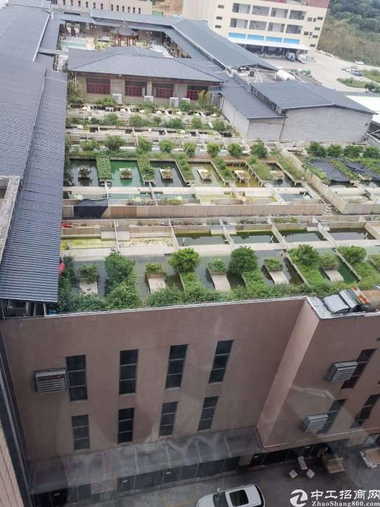 石湾精品稀缺小独院出售 占地面积3000平方 建筑面积2