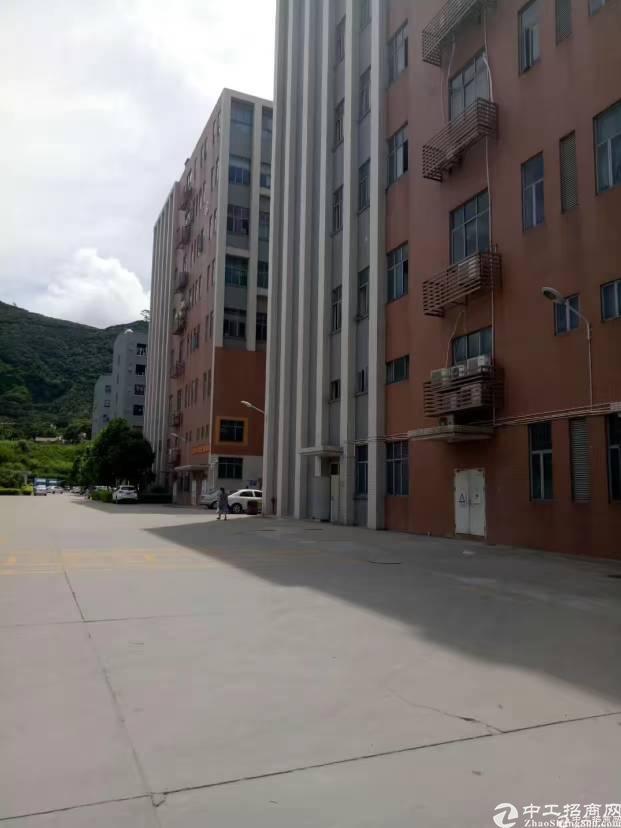 (出租)西乡鹤洲独院厂房出租8920平一二楼500平起分