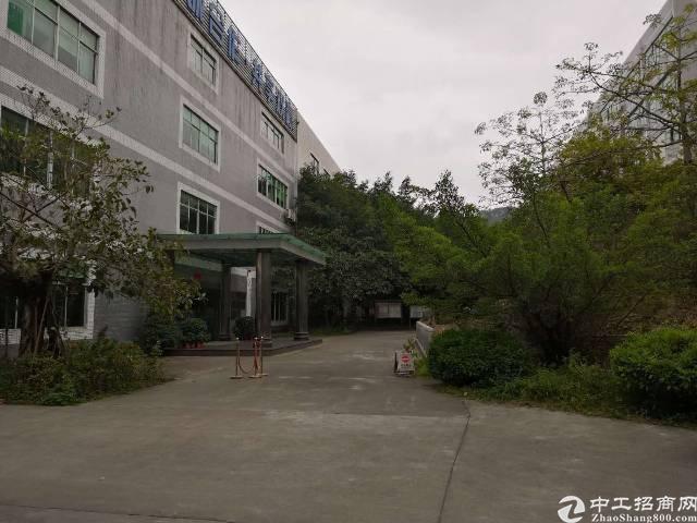 龙华福龙路旁新出优质独栋厂房1-3层13000平可分租