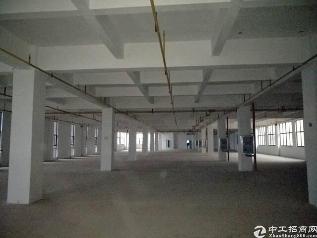 东西湖环湖中路标准厂房1700平米出租。可以生产,加工,仓储