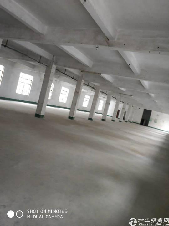 惠城区全新标准厂房