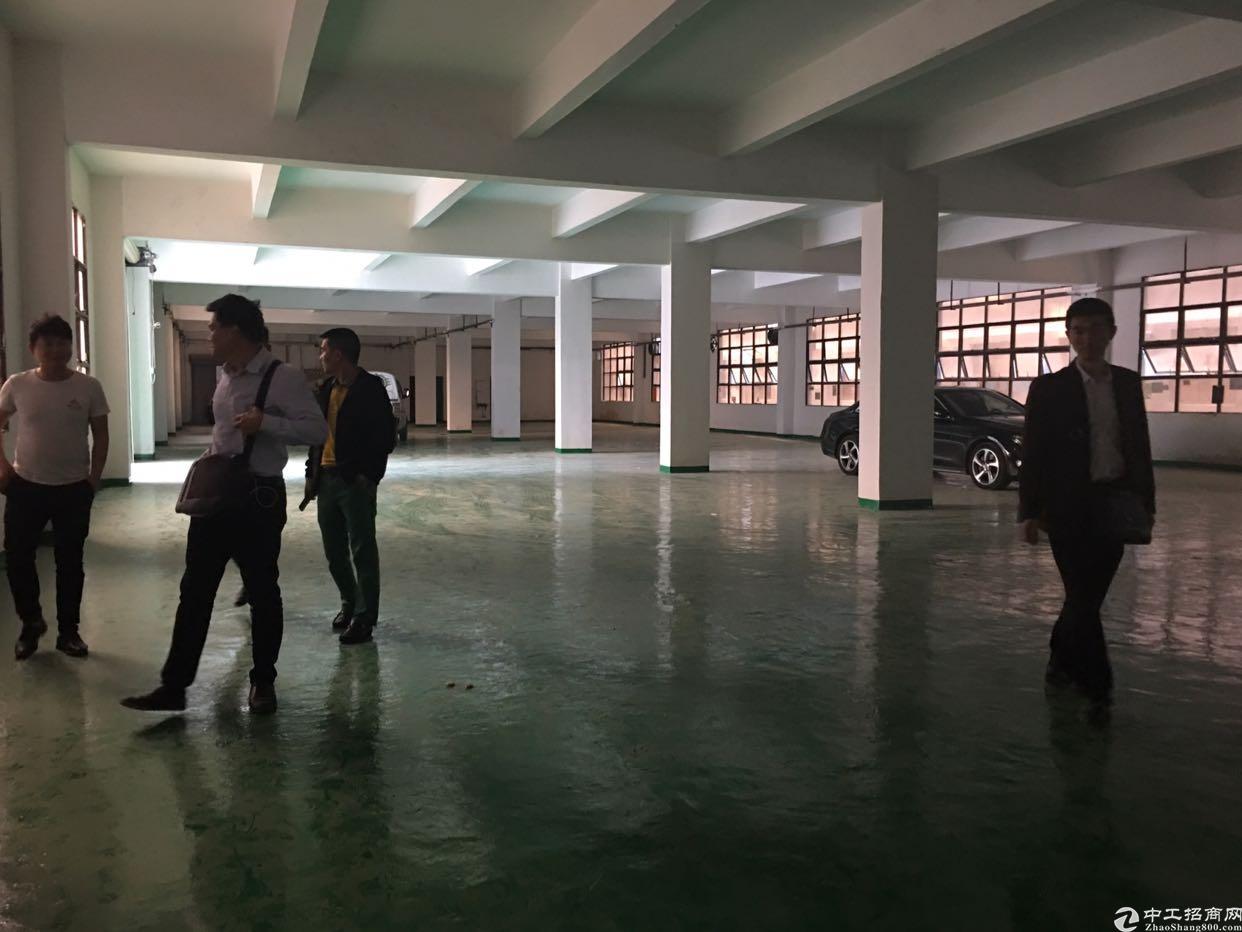 坪户华南城附近新出带装修一楼标准厂房1400平,层高5米