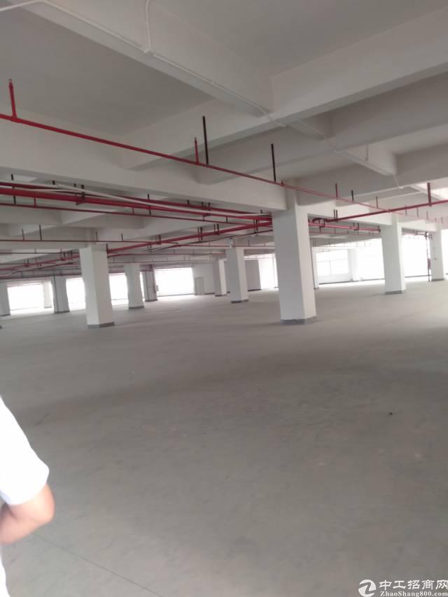 黄江镇独门独院厂房带红本招租-图3