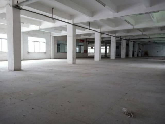新圩镇中心 独院厂房 厂房1-2层2900平