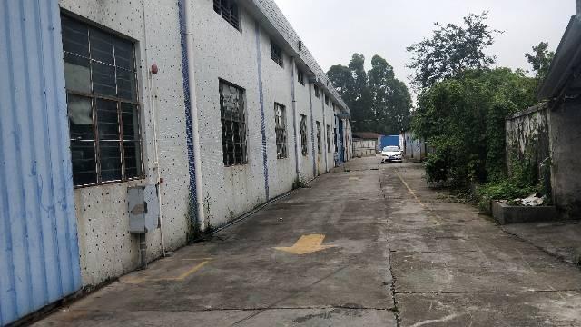 钟落潭竹料105国道边5000平方单一层可做生产仓库-图3