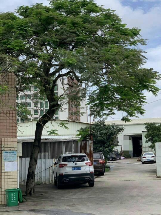 东莞市成熟工业区独院铁皮房3000平米出售