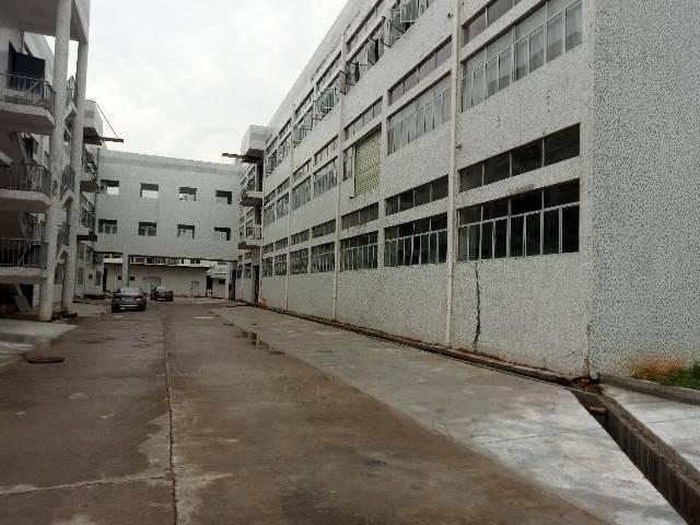 雁田村委厂房大小可分租-图2