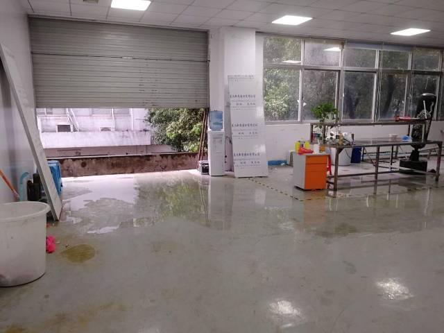 观澜原房东400平厂房全新装修无转让费-图5