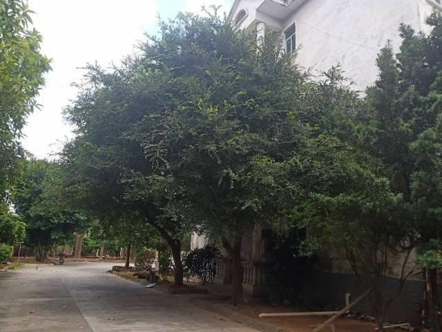 洪梅原房东厂房单一层砖墙到顶,滴水十米,自带印刷,塑胶环评,