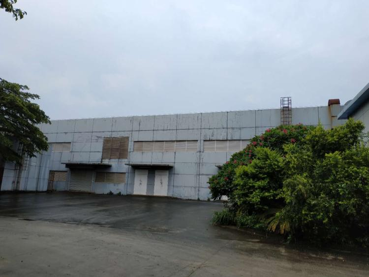 光明长圳1400平方钢结构出租,高度9米