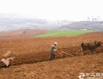 内蒙古100亩国有指标官网出售