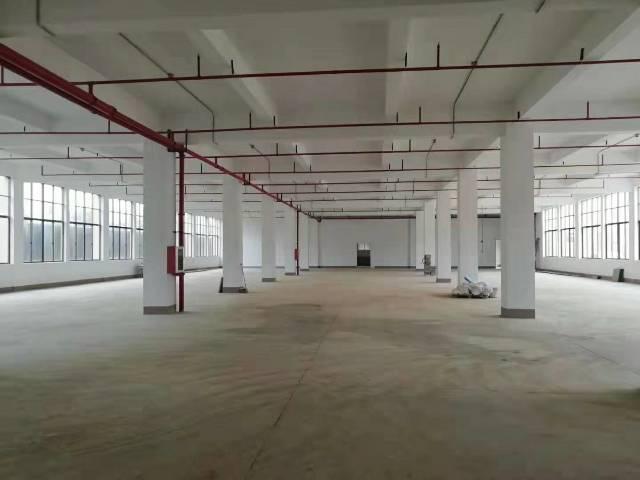惠城小金口原房东全新独院标准厂房5000平出租