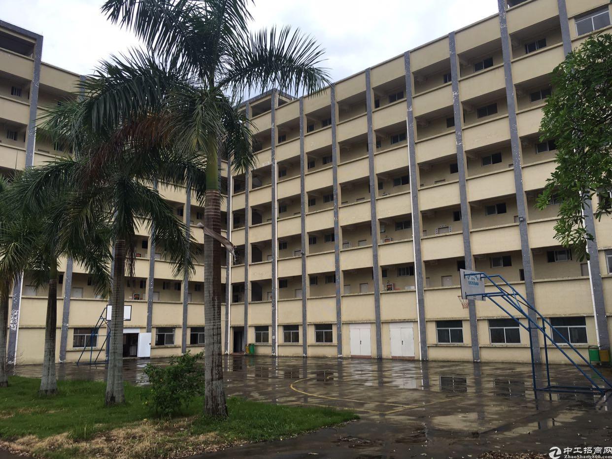 惠阳区淡水占地面积2300平永久产权公寓出售