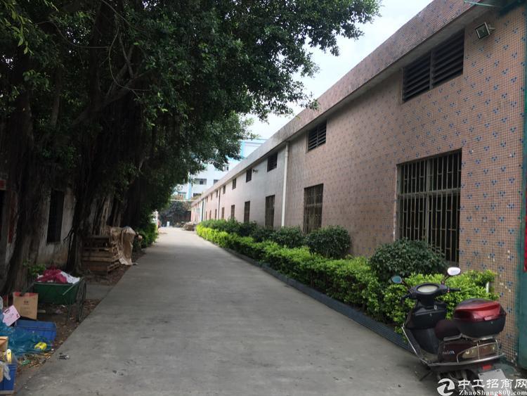 厚街镇三屯村靠近道滘附近720平方仓库型钢构厂房推荐