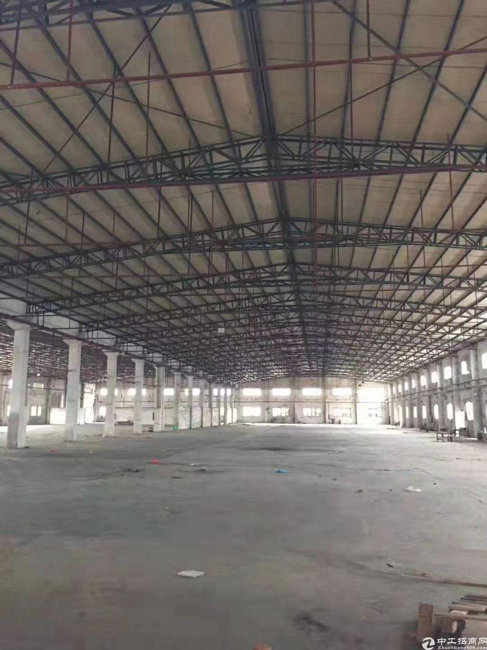 新出望牛墩独门独院钢构厂房