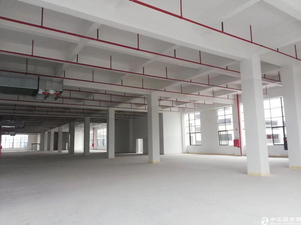 惠城区陈江标准单层面积5300平方,内部情况看图,