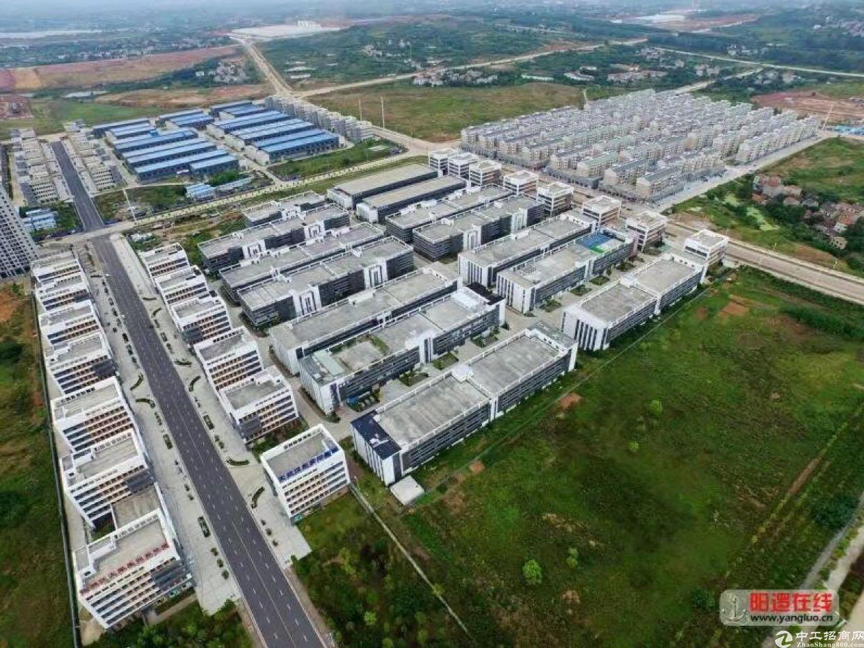 新洲阳逻港3000亩稀缺厂房
