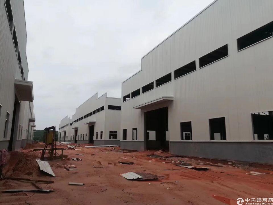 东莞洪梅工业用地厂房76000平方,滴水九米大小可分租