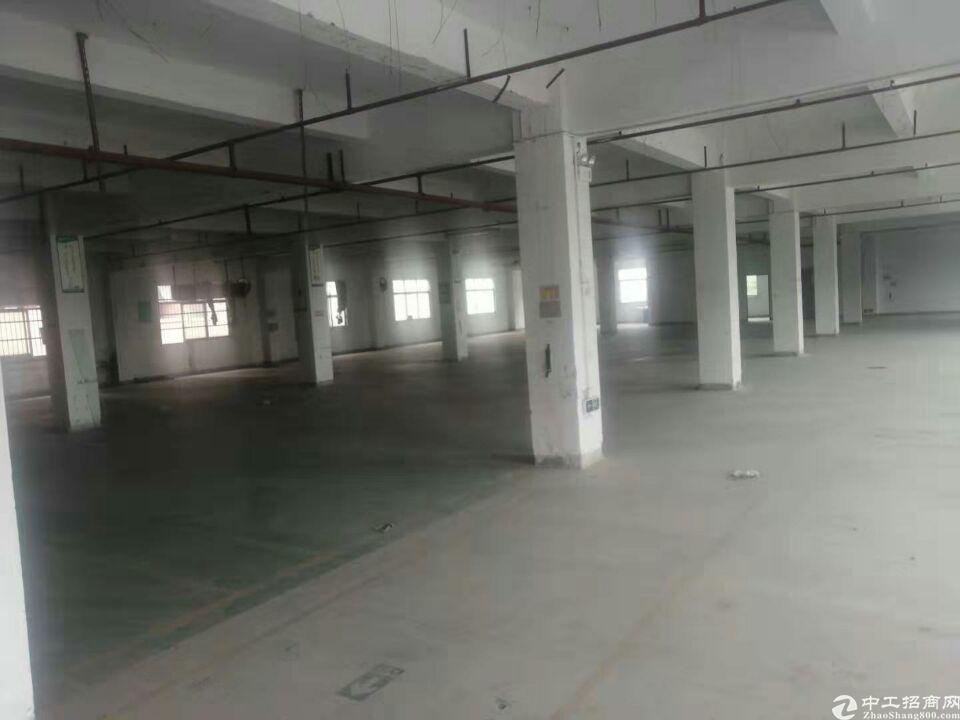 横沥原房东3700平方现成消防喷淋地坪漆现成办公独院厂房出租