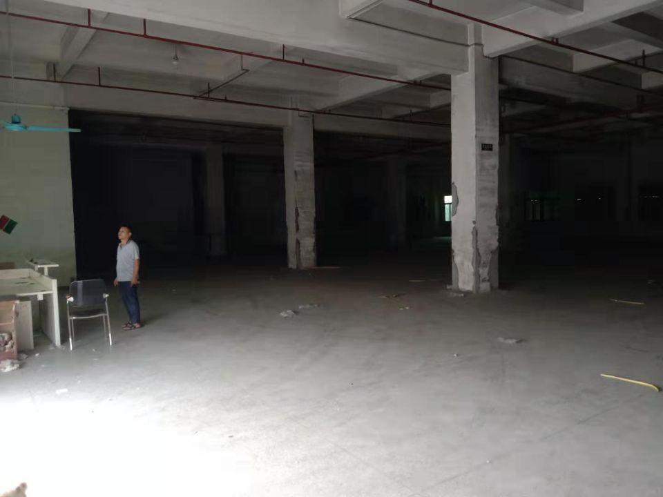 大朗镇巷头村标准一楼毛料仓库招租