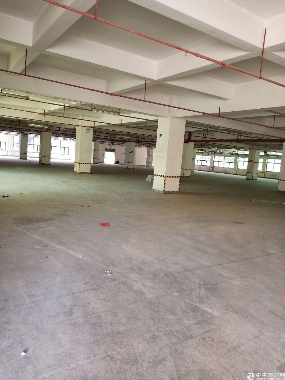 东城新出原房东标准厂房一直二层