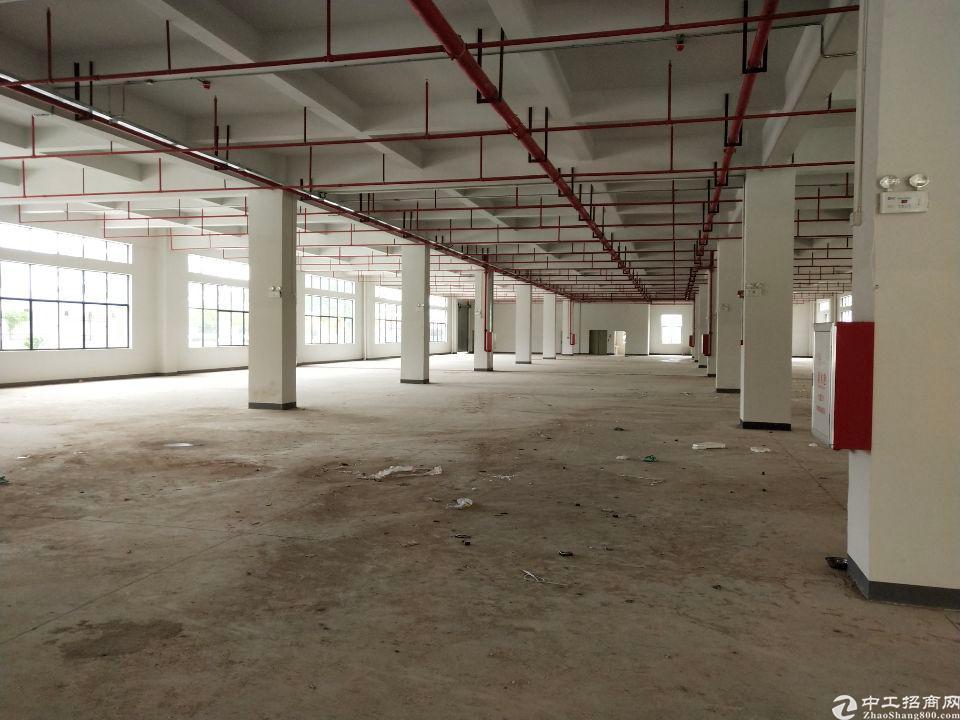 公明新出楼上原房东一整层2050,无公摊,租金20,带红本-图3