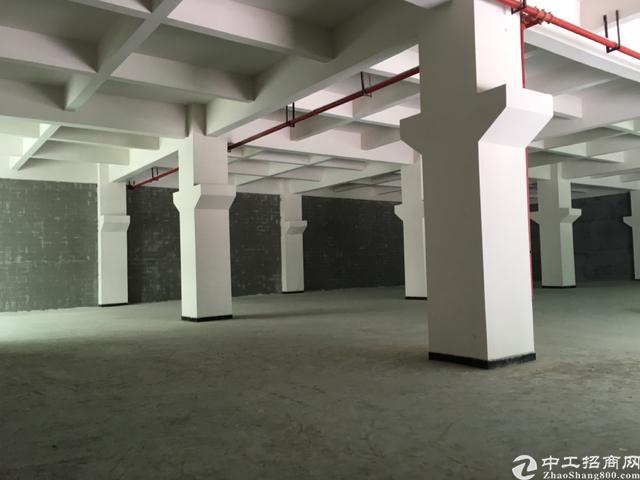 长安沙头新出一楼1960平米全新标准厂房