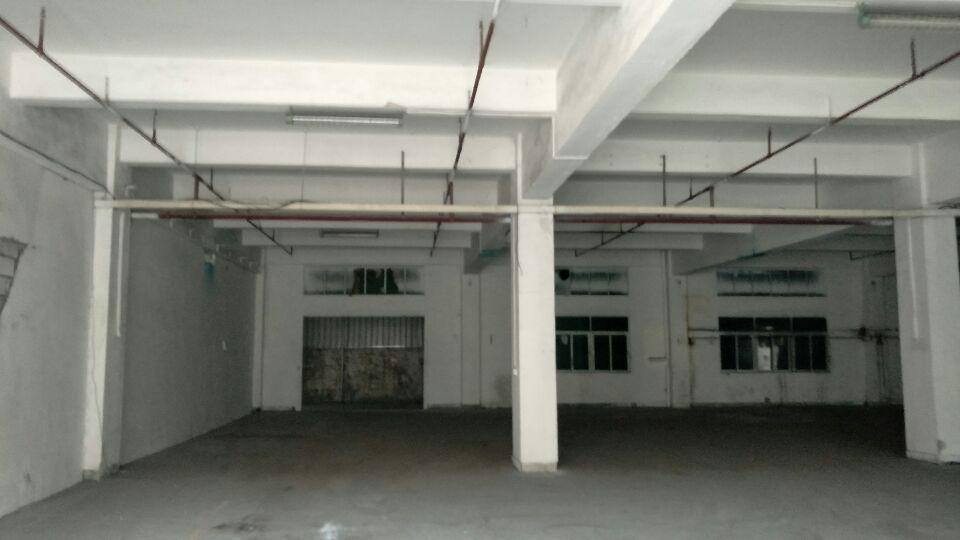 横沥镇新出一楼滴水5米1300平方电力充足