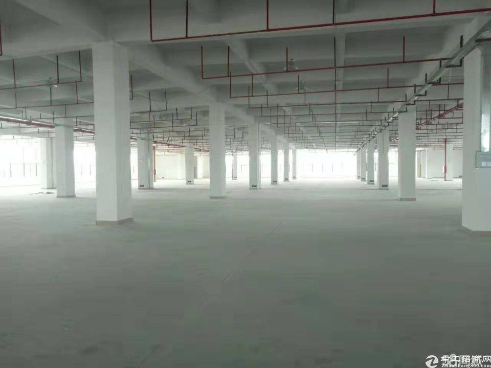 福永原房东红本厂房36800平方大小分租-图3