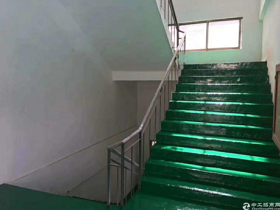 松岗原房东小独院3800平一楼6米高出租-图4