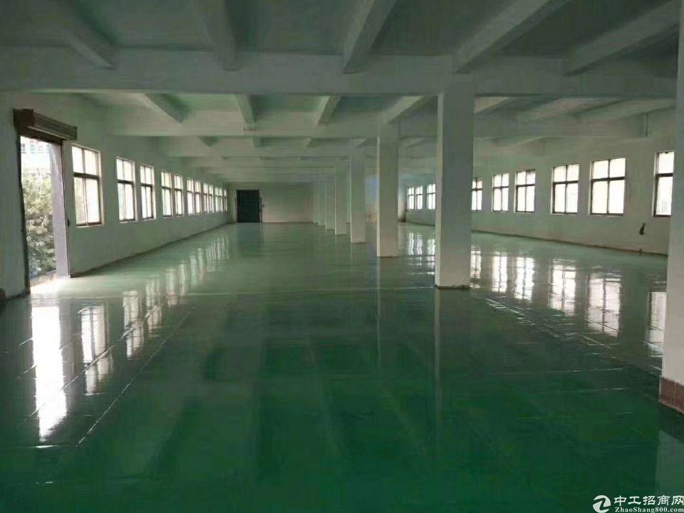 松岗原房东小独院3800平一楼6米高出租-图3