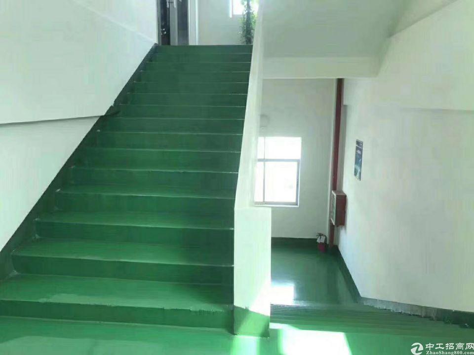 松岗原房东小独院3800平一楼6米高出租-图5
