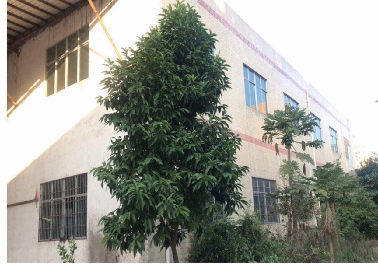 惠州泰美镇占地5626m²建筑4800m²国有证标准厂房