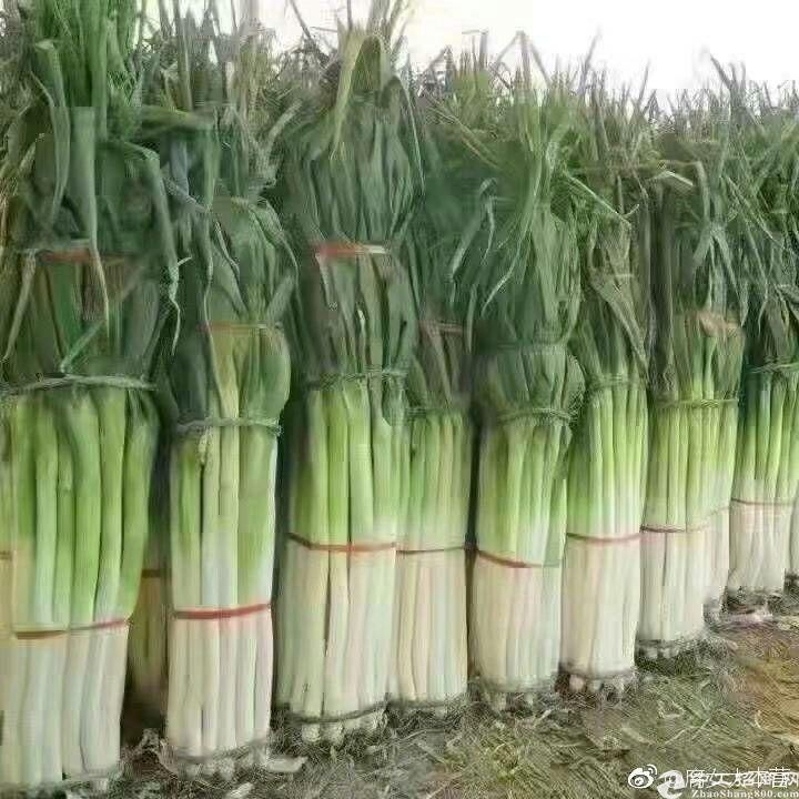 广汉10亩工业土地出售