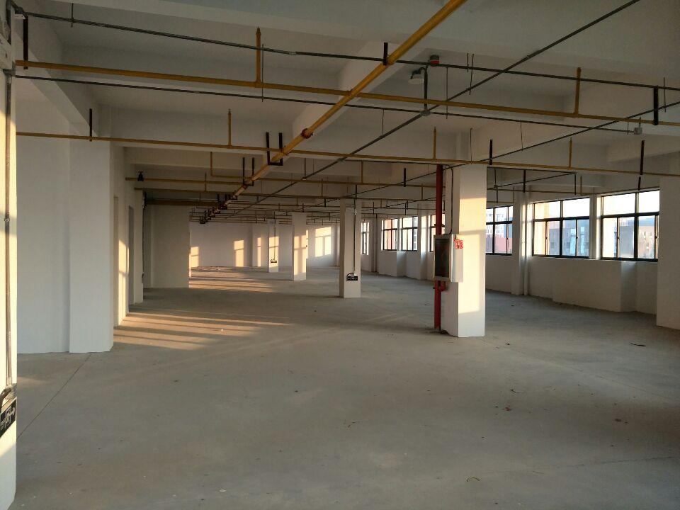 东西湖785平米单层厂房,加工仓储物流冷链,中央厨房配套齐全