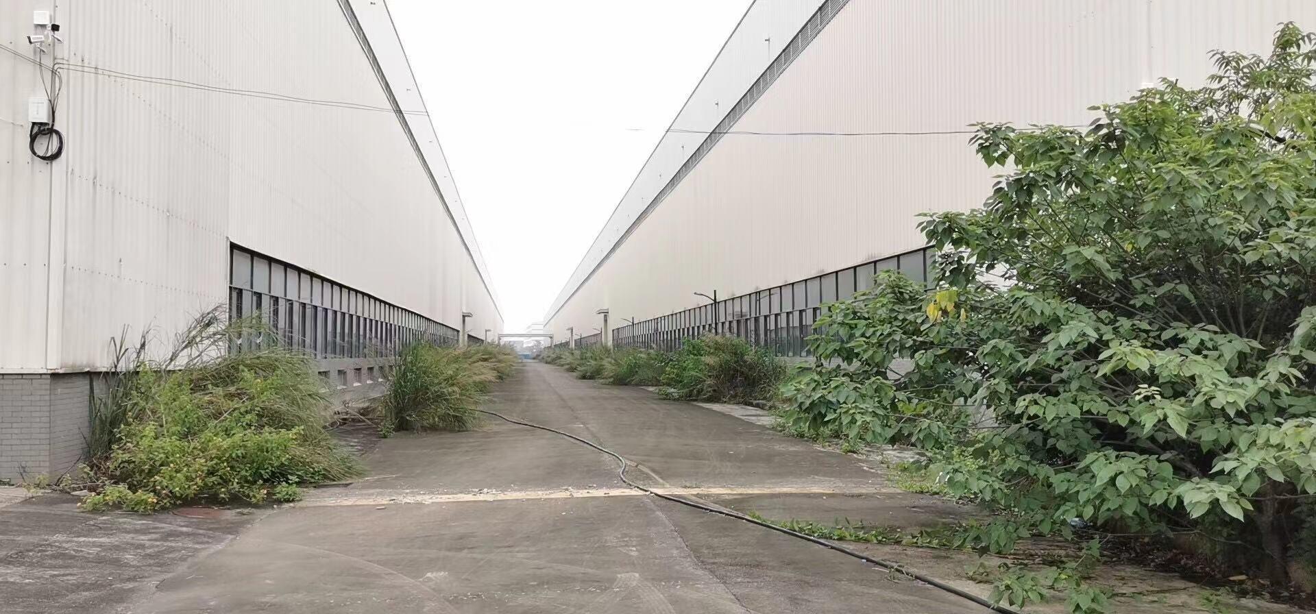 肇庆鼎湖重工厂房72000平方出租,滴水12米,有排污管道