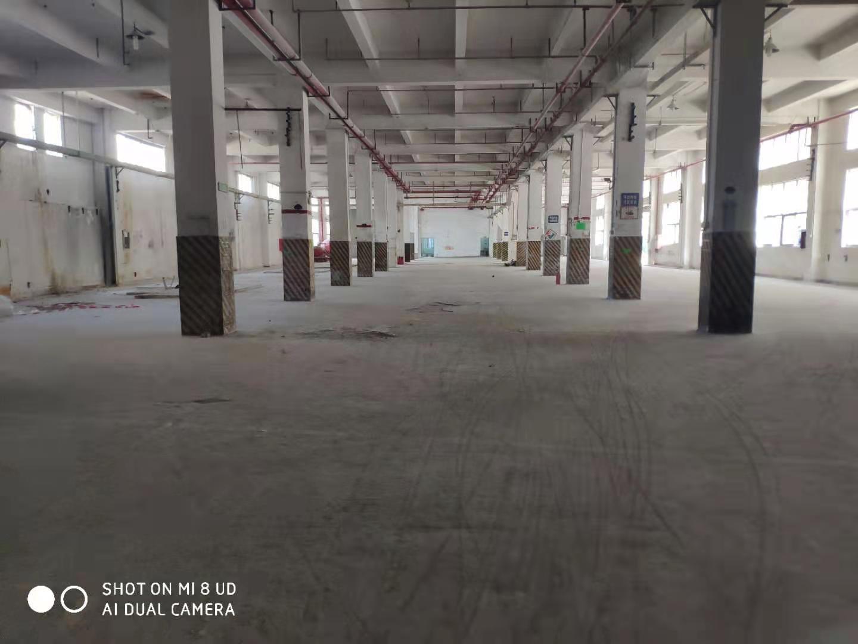 梅观高速附近独栋仓库出租,一二楼6米高,二部电梯,二次消防。