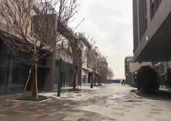 东莞厚街全新小面积高端厂房800-20000平,大小可出售图片5