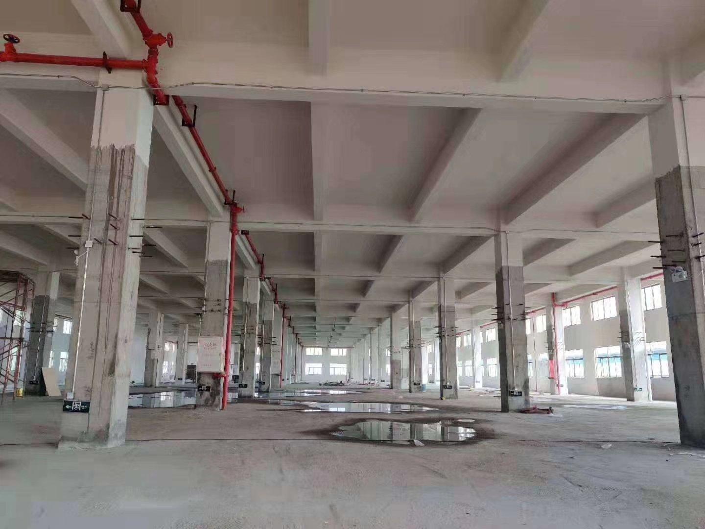 高明区明城独院厂房 厂房面积:6500平 宿舍办公1500㎡-图3