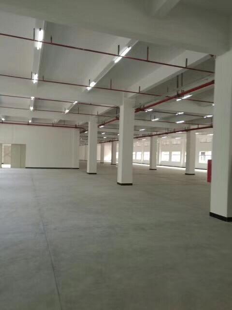 惠城区小金口原房东一楼1600平出租