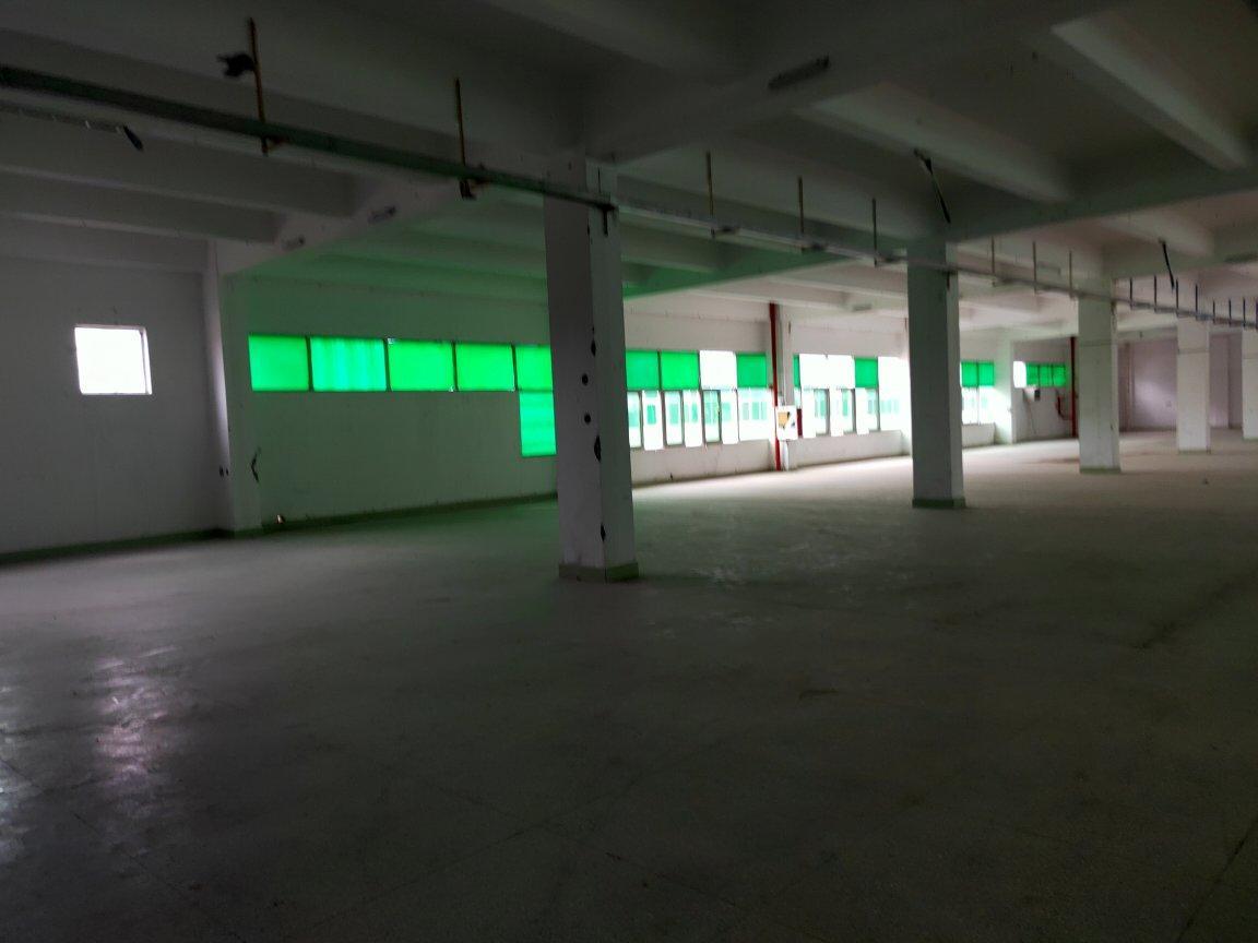 龙华大浪新百丽附近新出楼上4000平,标准厂房原房东直租-图3