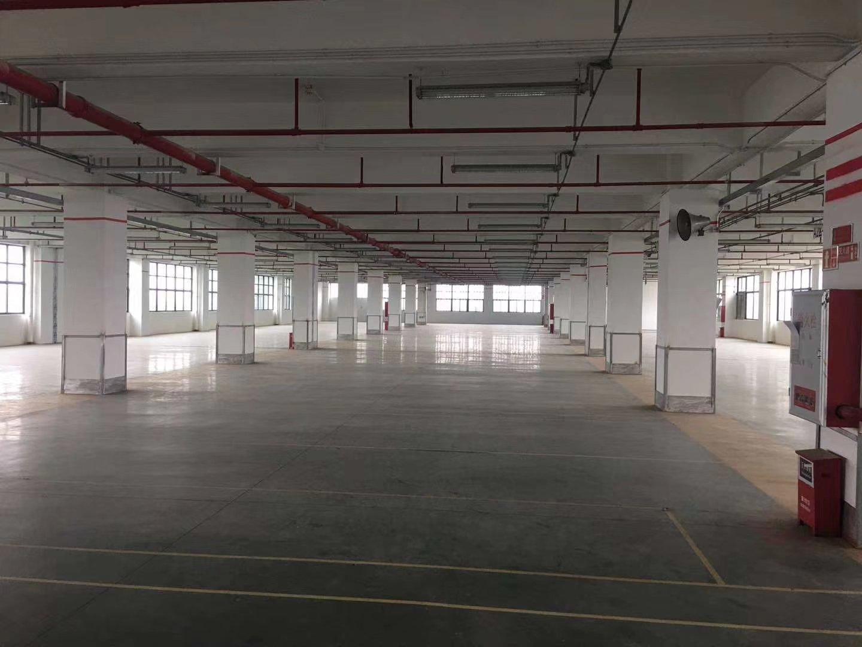 龙华大浪新佰丽附近楼上3300㎡原房东红本标准厂房厂房出租-图4