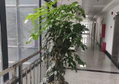 寮步镇商务大厦楼上180平3200元现成装修