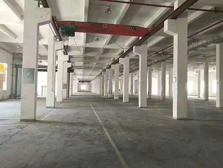 惠阳大亚湾西区标准厂房11500平层高8米