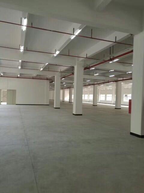 惠城区大亚湾新空出原房东标准厂房15000平方招租