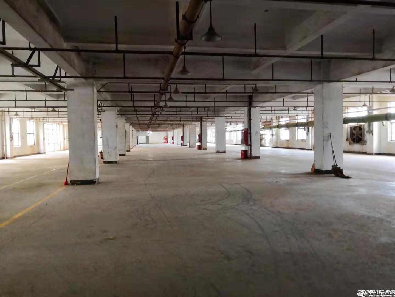 坪山竹坑工业区带装修厂房一楼500平方出租,采光好-图4