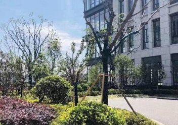 黄岛保税区层高8.1米独栋厂房出售可按揭做低首付图片3