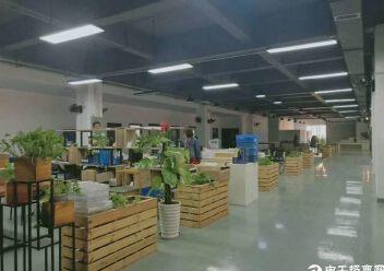 观澜桂花梅观高速出口新出楼上整层600平带精装修厂房出租图片2