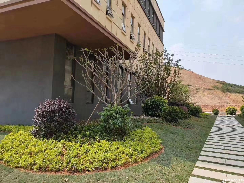 端州双龙1800㎡独栋厂房出售首层高8.1米-图3