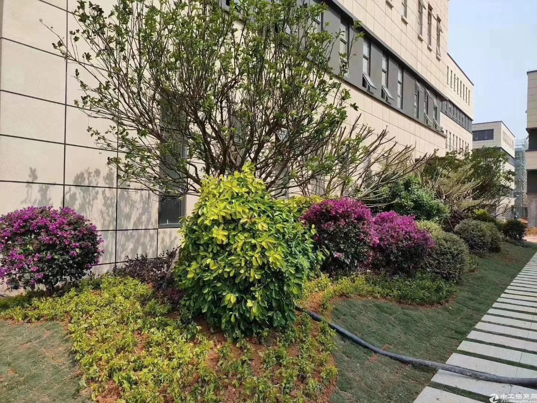 端州双龙1800㎡独栋厂房出售首层高8.1米-图5